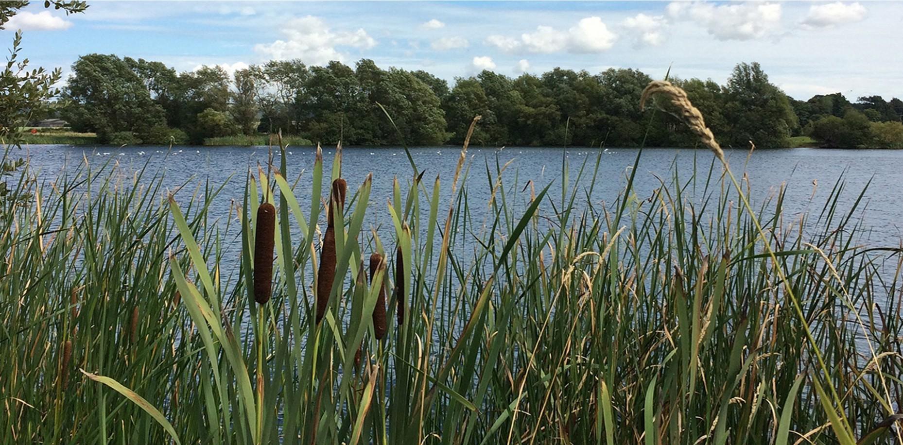 Public Art Consultation Conningbrook Lakes